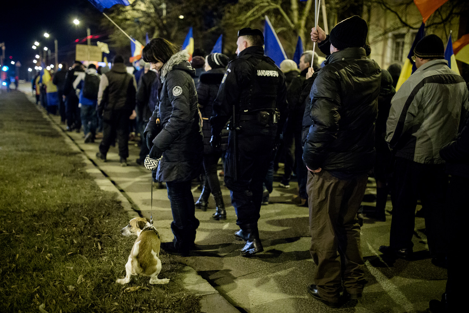 Dog taking a poop while protesters take to the streets in Timisoara, Romania